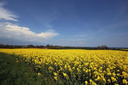 Blick auf Schönhagen im Frühjahr
